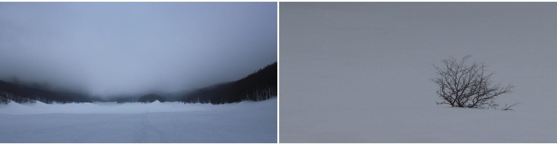 """Distesa di ghiaccio e nebbia del """"pianellone""""tentando di raggiungere la cima del """"Gallinola"""". Albero quasi totalmente sommerso dalla grande quantità di neve,con nebbia che lascia vedere ben poco in lontananza. Pianellone."""