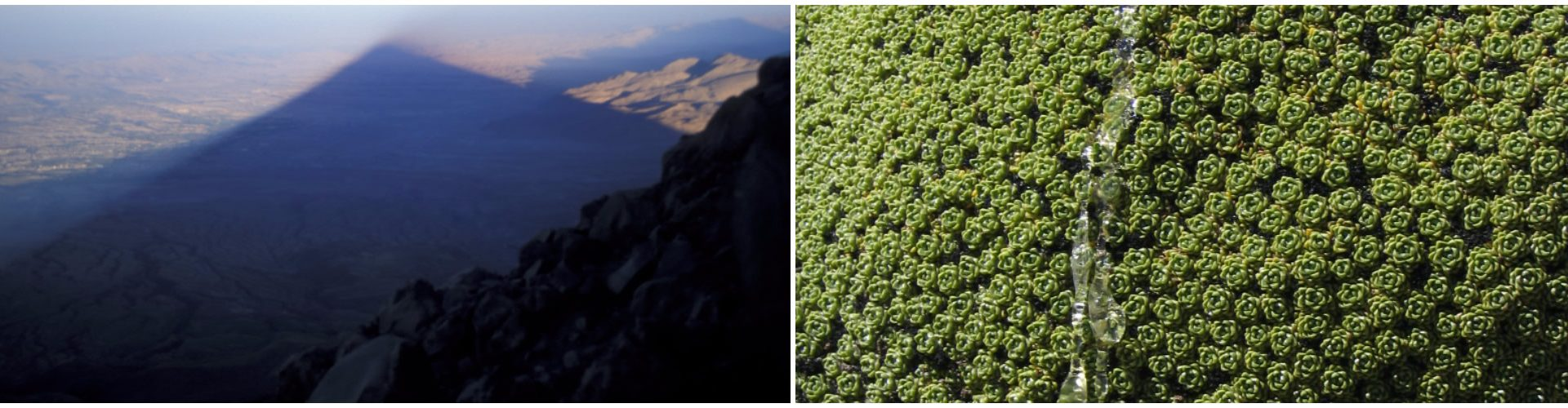 L'ombra del Misti su Arequipa. La Lareta (Laretia compacta) trasuda gocce di resina.