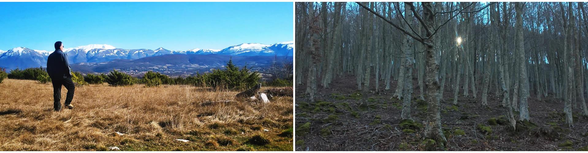 I Sibillini all'orizzonte. In cammino nel bosco.
